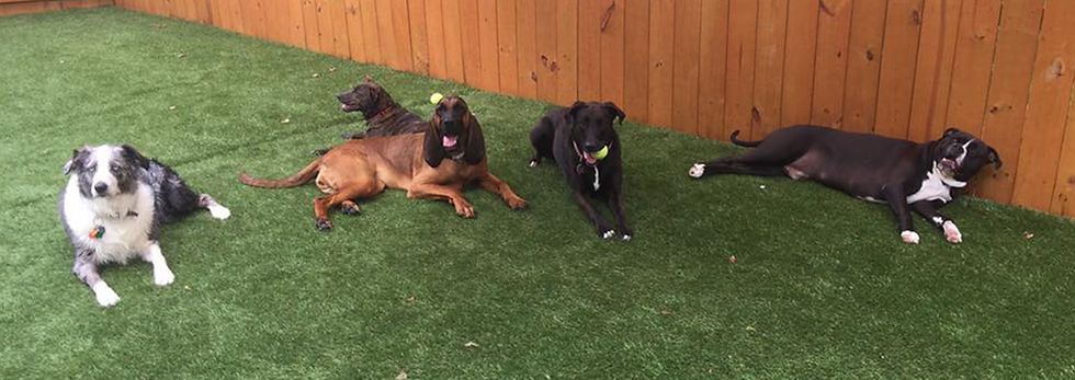 Dog Daycare and boarding Indian Trail NC