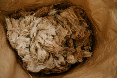 Alpaka Wolle kurz nach der Schur
