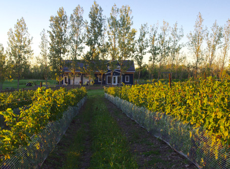 A Cottage in the Vineyard