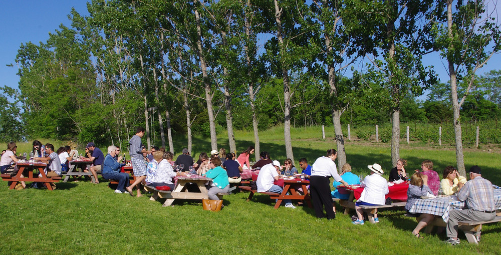 A picnic break near the vineyard at Broken Stone Winery