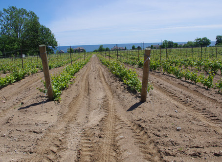 A Wine Tour with Broken Stone