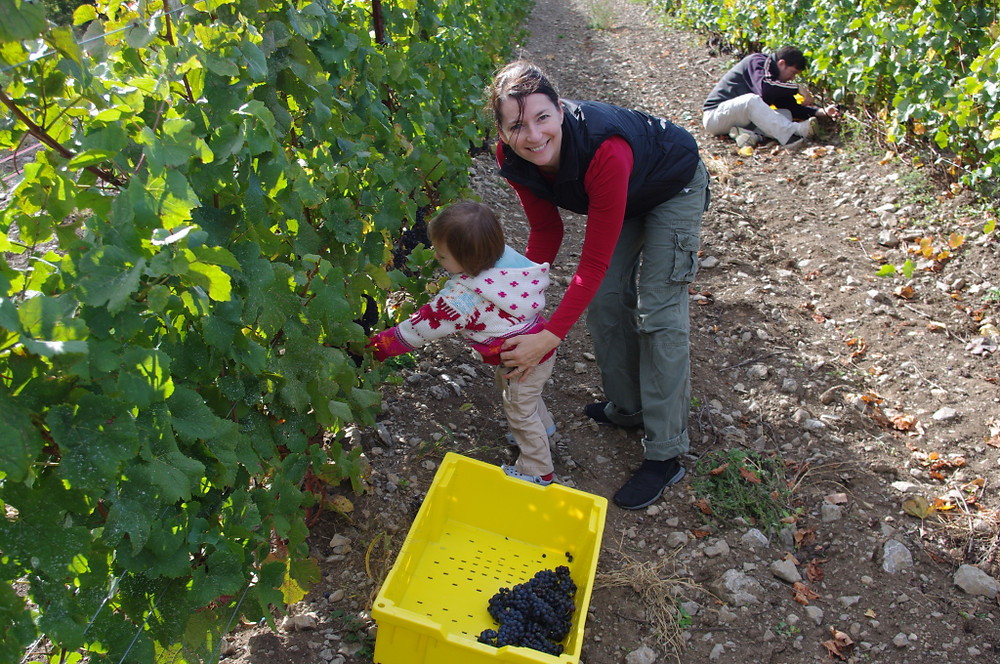 vineyard and misc nov 2010 219
