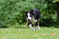Hund Knochen.jpg
