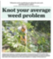 Knot weed.jpg