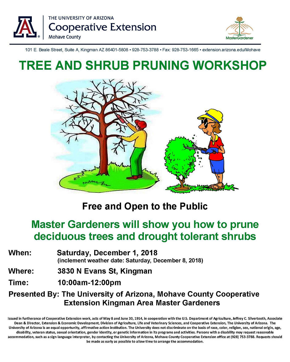 Deciduous tree  shrub pruning flyer Dec