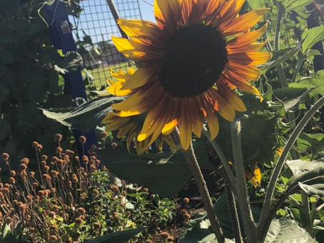 Welcome to DIG it Kingman Community Gardens new Blog Page