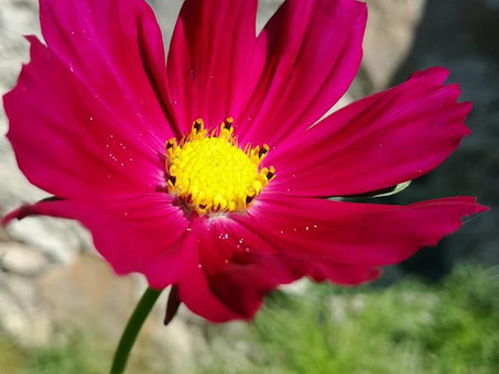 Lill nimega Kosmos...