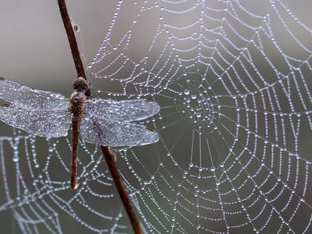 Usaldus ja vastutus on endiselt märksõnad. Hommikused mõtted detsembrikuises vihmas.