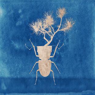 Escaraceta