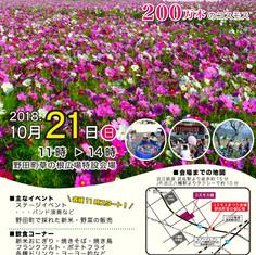 コスモス祭り2018.jpg
