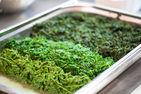 Corso base di cucina Vegetale