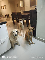 Usha, Cookie, Raksha _ Fawn.jpg