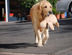 Large Dog1.jpg