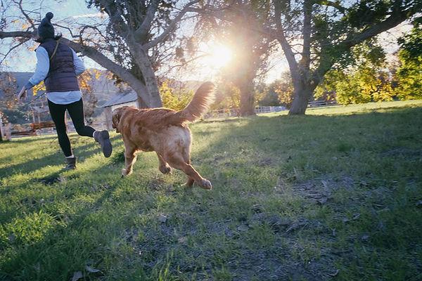 Adult Dog.jpg