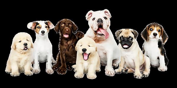 group-portrait-adorable-puppies_53876-64