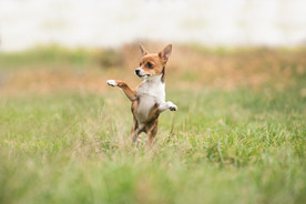 Small Dog1.jpg