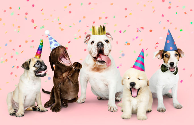 group-puppies-celebrating-new-year_53876