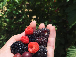 פירות יער מגוונים