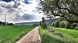Rheinisches Idyll
