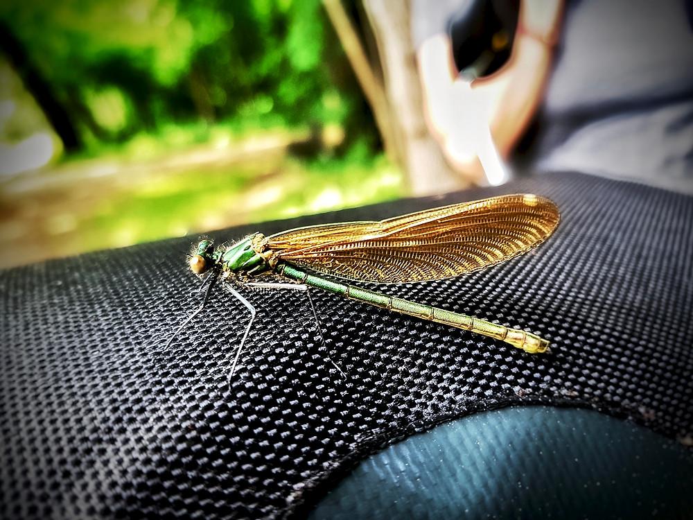 Eine Libelle begleitet uns auf einer Fahrradlenkertasche.