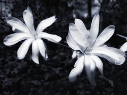 Blüten im Kontrast