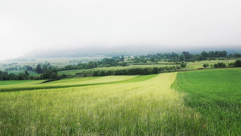 Die Schwäbische Alb liegt im Dunst des Morgennebels. Saftige Wiesen und Felder im Vordergrund, die durch einzelne grüne Baumreihen abgegrenzt sind.