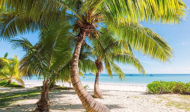tropical-roots_1083x.jpg