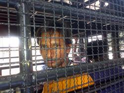 Asylum Seeker in police van