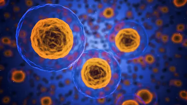 Cells in our bodies