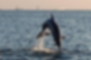Tampa Bay dolphin tour.png