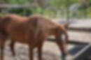 HorsePower for Kids.png