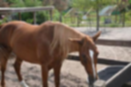 HorsePower for Kids