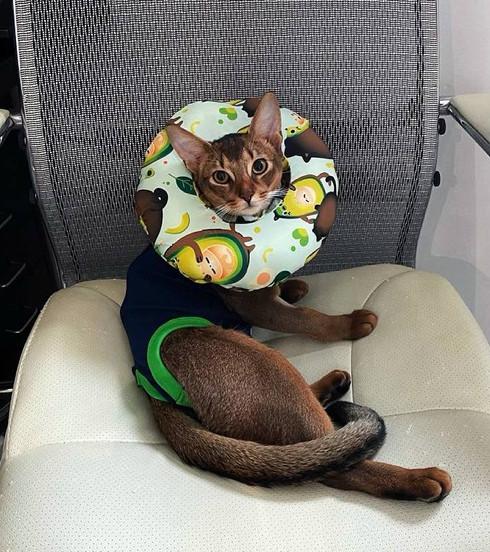 Защитный мягкий воротник-подушка для кошек и собак от 4 до 7 кг, размер М, Freddy's Friends Brand