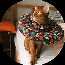 Защитный воротник-подушка Freddy's Frien
