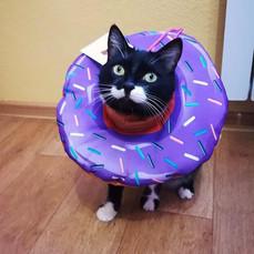 """Защитный воротник """"Пончик"""""""
