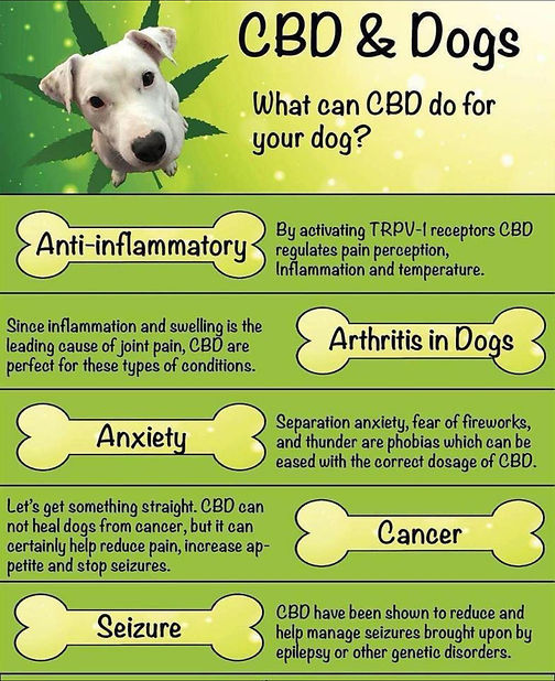 cbd-for-dogs.jpg