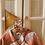 Thumbnail: Sleepy Tiger Juju