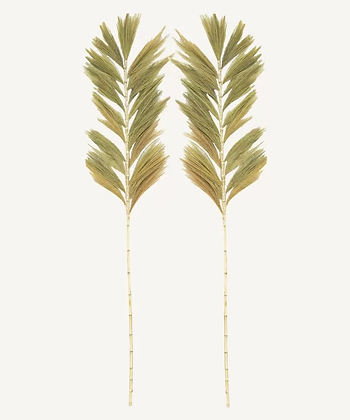 Wavy Palm Leaf