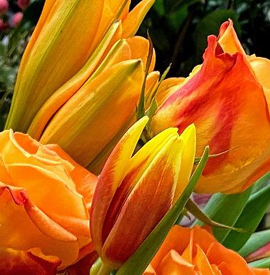 Fresh Flowers or Blooming Basket