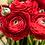 Thumbnail: Rosey Red Ranunculus