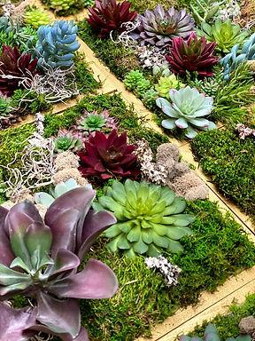 Succulent wall Art Website 2.jpg