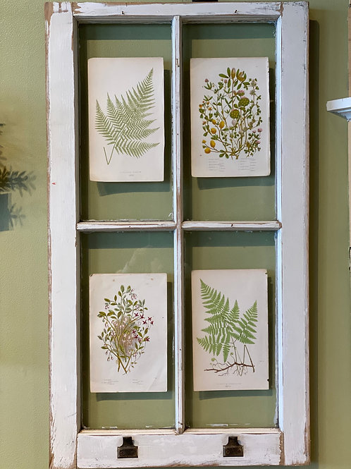 Window Frame with French Botanical Prints