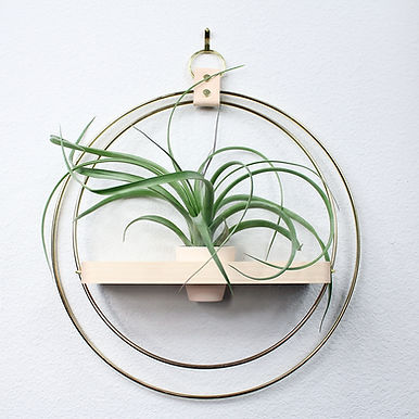 Natural Wood with Mini Air Plant Pot