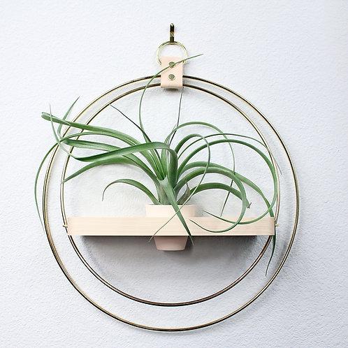 Natural Wood with Mini Air Plant Pot