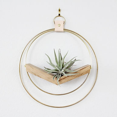 Natural Wood & Wire Air Plant Hanger