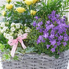 blooming basket.jpg