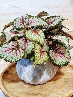 Live plants md.jpg
