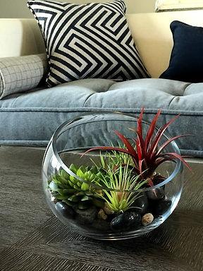 succulent design website homearama favor