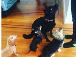4 Pups