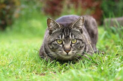 猫エイズ白血病